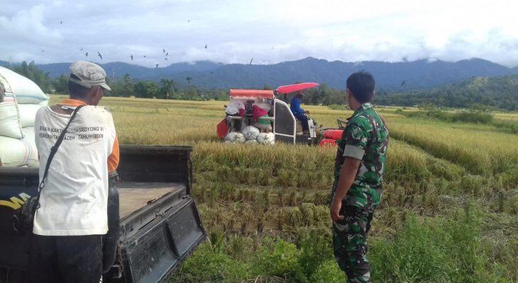 Babinsa Siap Dampingi Petani Dalam Kegiatan Panen Padi