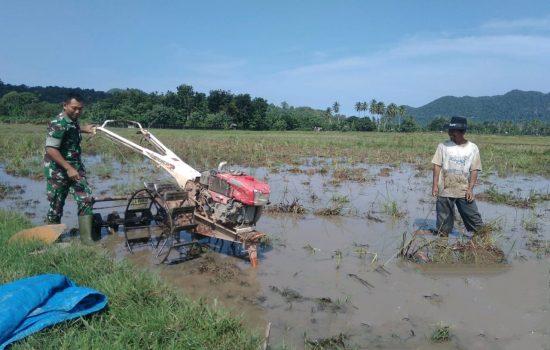 Gunakan Traktor Koramil, Babinsa Bantu Petani Bajak Sawah