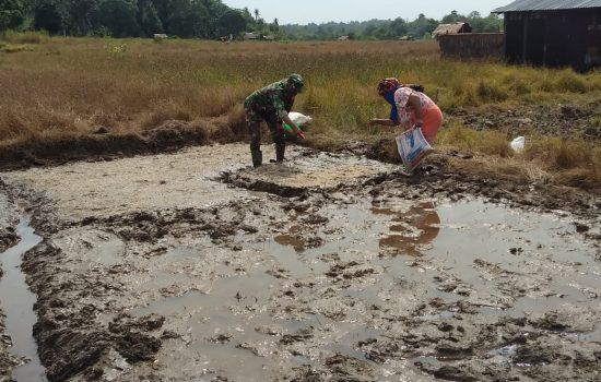 Babinsa Koramil 02/Simeulue Tengah membantu petani menanam bibit padi