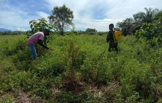 Babinsa Bantu Petani Buka Lahan Jagung